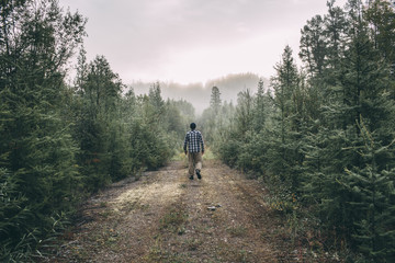 Man walking on path in forest