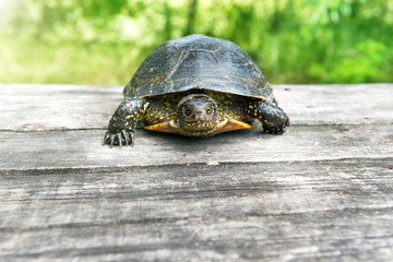 Turtle on wooden desk