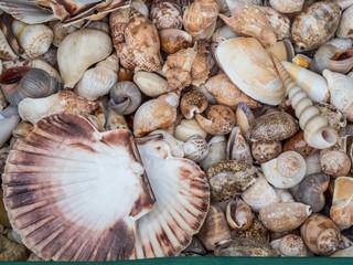 Muschel Textur Nordsee