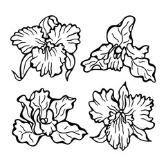 Orchid flower - vector illustration. Orchids isolated on white background. Flower set