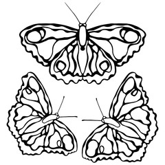 Butterflies isolated on white background. Butterfly design. Objects for coloring.