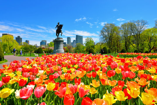 Boston Public Garden tulips and George Washington Statue on a Beautiful Spring Day