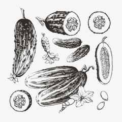 Ink drawn cucumbers