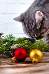 Cat and branch of a Christmas tree on a wooden surface.