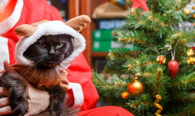 Picture of New Year's black cat in deer suit with Santa