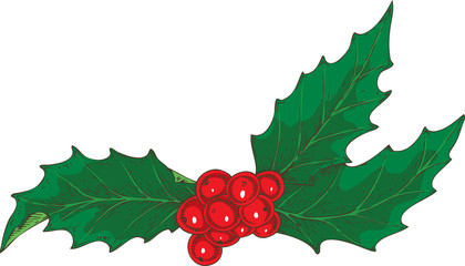 Christmas Mistletoe with Red Berries
