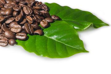 Kaffeebohnen auf Kaffee-Blätter