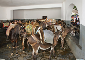 Donkeys in Lindos. Rhodes island. Greece