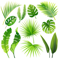 set of vector tropical leaves. vector illustration. realistic plants