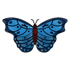 butterfly insect bug icon image vector illustration design  sketch style