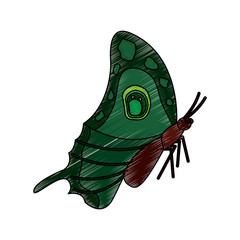 butterfly insect bug sideview icon image vector illustration design  sketch style