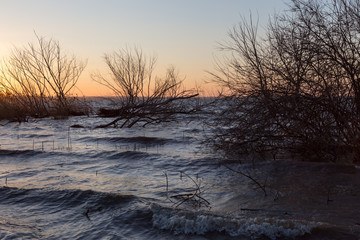 View of a lake at sunset, with skeletal trees, waves and warm colors
