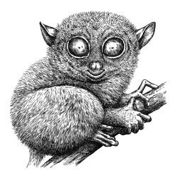black and white engrave isolated tarsier illustration