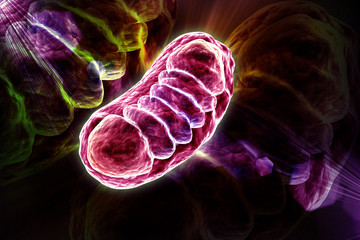 3d rendered Digital illustration of Mitochondria in colour background