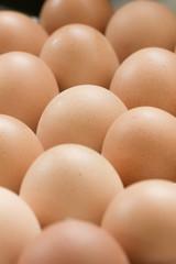 Chicken Egg fresh from farm.