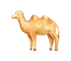watercolor camel on white background