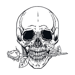 human skull with a rose
