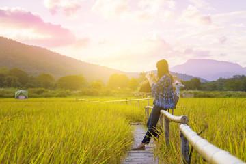 Woman traveler admiring yellow rice field scenery
