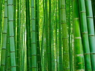 Bambusowy tło las