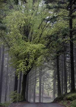 Forêt du mont Beuvray à Saint-Léger-sous-Beuvray, Saône-et-Loire, France