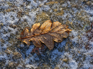 A golden oak leaf lies on icy ground, dew drops on the leaf glisten in the morning sun.