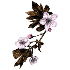 the branches of Apple trees flowers sprouts petals coloured drawing sketch vector graphics