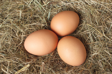 Chicken eggs on the nest in hay