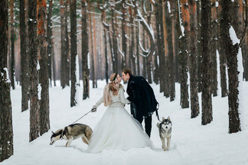 Bride and groom are walking on the snowy trail with two siberian husky. Back view. Artwork