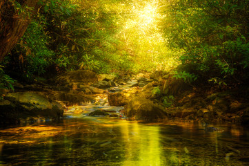 Sun rays burst through forest foliage along Verkeerde Kill in Minnewaska reserve, Upstate New York