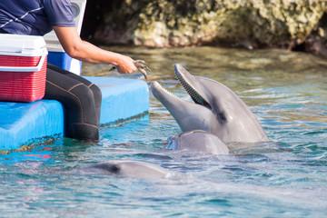 Delfin freut sich auf Fischfutter...