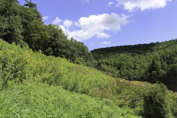 Wildflowers on the banks of the Letchworth gorge with mountains and forest