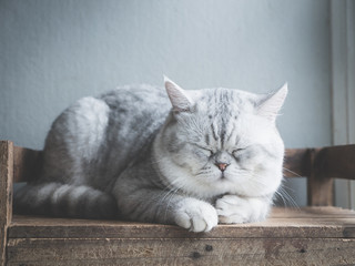 Cute cat sleeping on wooden shelf under light from a window