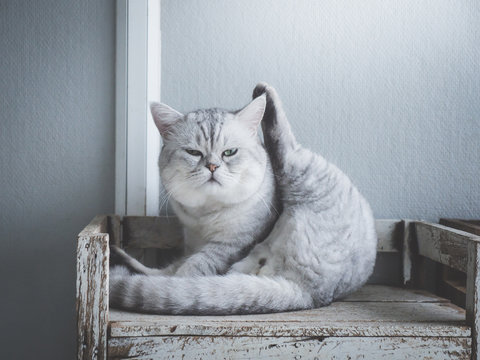 Cute short hair cat lying on old wood shelf under light from a window