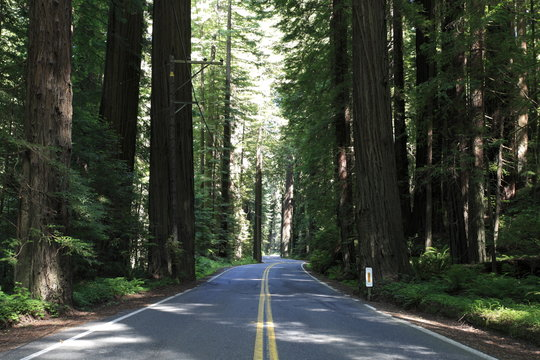 Avenue of the Giants in Humboldt Redwoods State Park