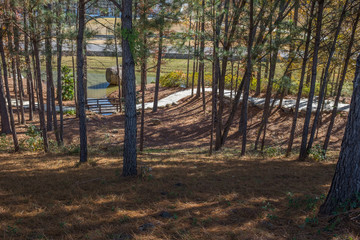 A trail through the woods on the property of Barber Motorsports Park in Birmingham, Alabama, USA