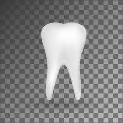 White realistic 3d molar on grey background.