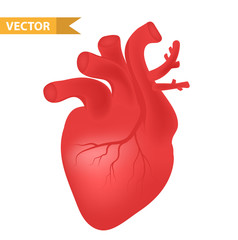 Human heart icon, realistic 3d style. Internal organs symbol. Anatomy, cardiology, concept. Isolated on white background. Vector illustration