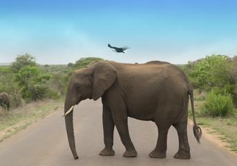 éléphant avec un aigle