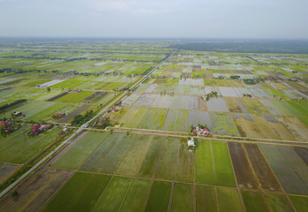 Aerial view of green paddy field at south east Asia.