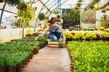 Attractive professional middle aged florist woman holding flowerpot with flowers while kneeling in the greenhouse full of colorful different flowers and lot of flowerpots.