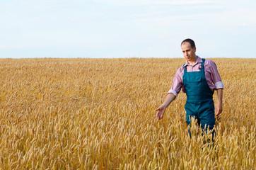 Farmer inspecting wheat field