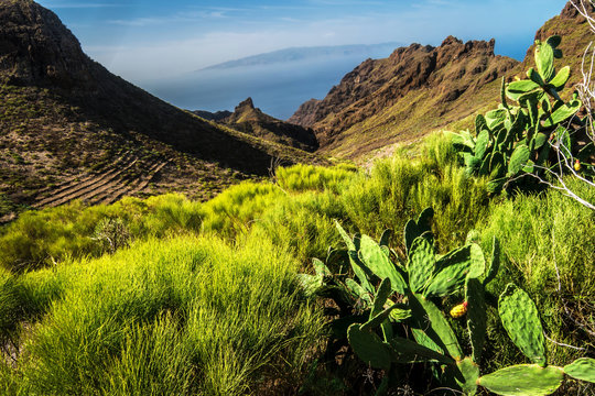 View over Masca canyon, big tourist attraction of Tenerife, Spain