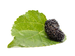 mulberries with a leaves isolated on white background. Mulberry this a fruit and can be eaten.