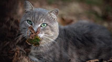 Portrait of street cat.