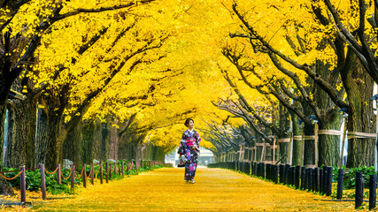 Wall Mural - Beautiful girl wearing japanese traditional kimono at row of yellow ginkgo tree in autumn. Autumn park in Tokyo, Japan.