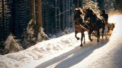 Sleigh ride in motion on the snowy forest