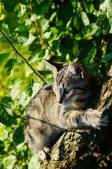 A kitten climbing a tree