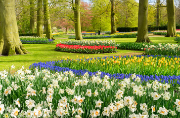 Colourful Tulips and Dafffodils Flowerbeds in an Spring Formal Garden