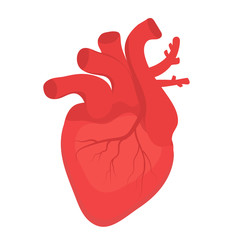 Human heart icon, flat style. Internal organs symbol. Anotomy, cardiology, concept. Isolated on white background. Vector illustration