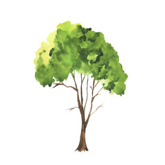 Green watercolor doodle tree isolated on white background. Hand drawn vector illustration.